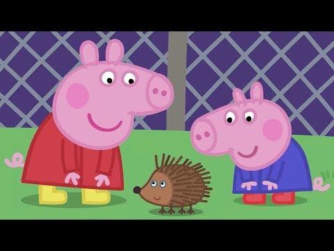 Peppa Pig English Episodes | Peppa Pig meets Mr Hedgehog! | Cartoons for Children #150