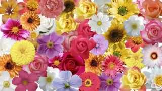 Where to Buy Wholesale Flowers For Wedding | Order Wholesale Flowers Online Wedding