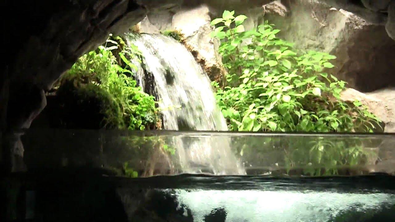 Acquario di milano youtube for Decorazioni acquario
