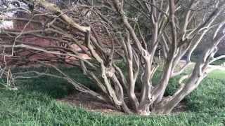 Clemson University - campus tour