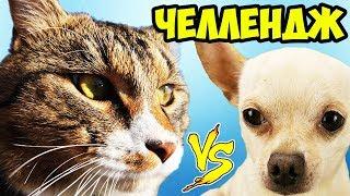ЧЕЛЛЕНДЖ КТО БЫСТРЕЙ КОТ ИЛИ СОБАКА КОТ ТИГРА И ПЁС ПЕРСЕЙ СОРЕВНУЮТСЯ | PET CAT