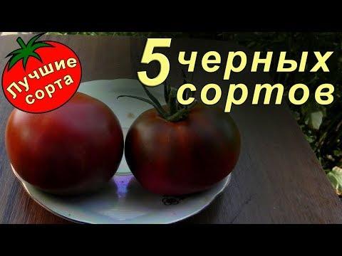 Черные томаты (лучшие сорта томатов)