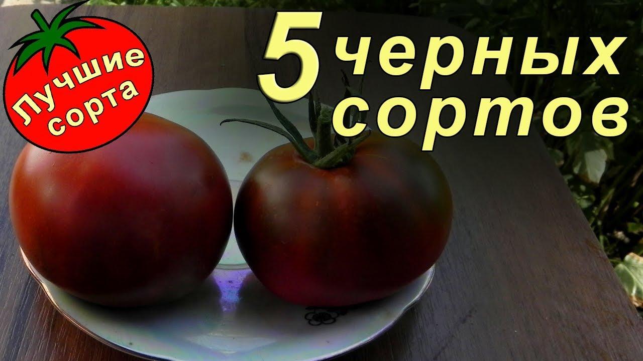 помидоры черные лучшие сорта