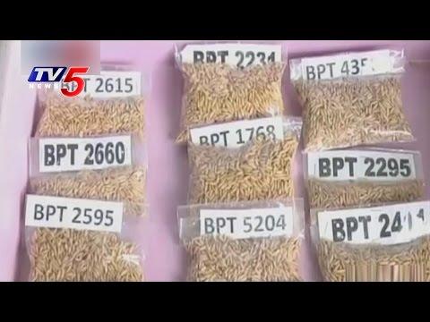 New Paddy Varieties For Kharif Season | Bapatla Rice Research Station |  Annapurna | TV5 News