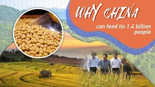 Why China can feed its 1.4 billion people
