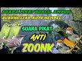 Suara Pikat Burung Kecil Ribut Ampuh Untuk Segala Jenis Burung Kecil Dan Besar  Mp3 - Mp4 Download