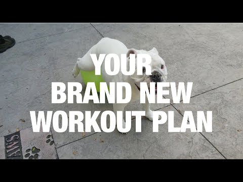 Your New Workout Plan