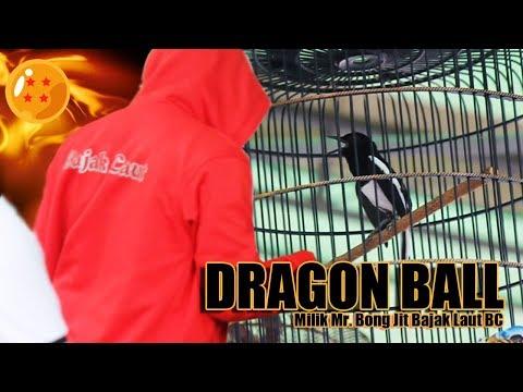 DHAFIN CUP 1: Kacer Dragon Ball Milik Mr. Bong Jit Tampil Nagen Disatu Titik Bongkar Masteran