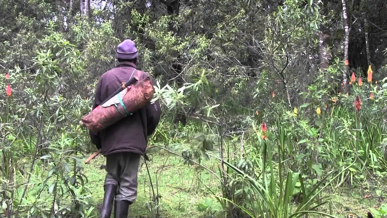 Ogieks traditionally make a living hunting, gathering herbs, and cultivating bees. Photo Credit: Jeff Ebner/YouTube
