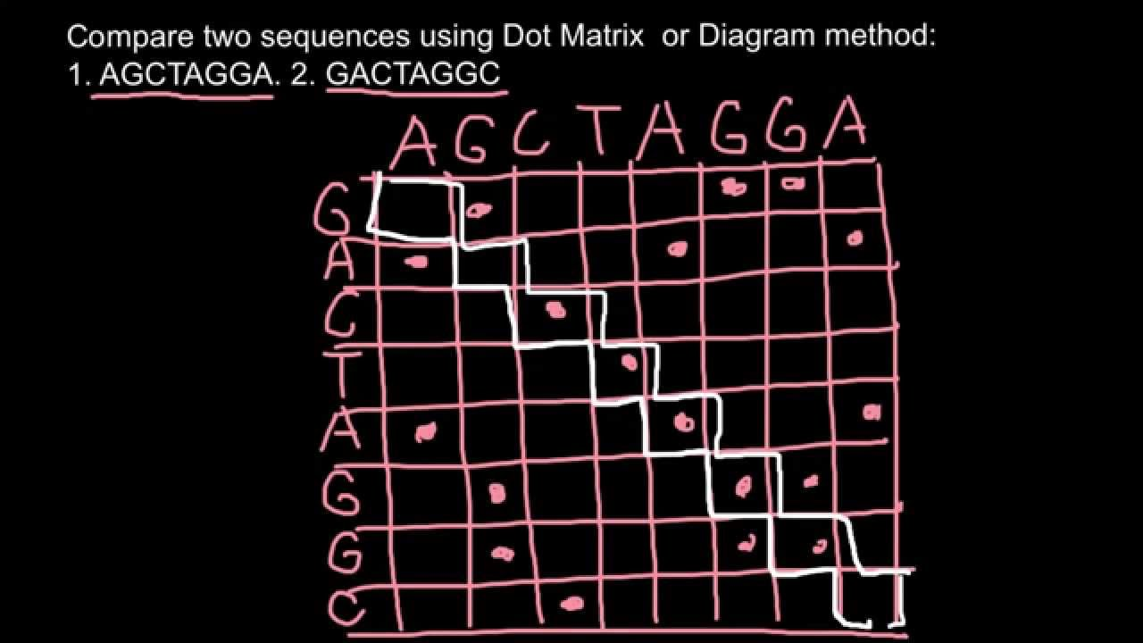 Bioinformatics  Dot Matrix Or Diagram Method Explaned  1