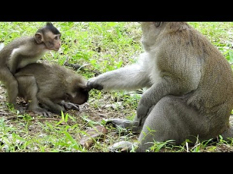 Very Confusing Now Real Situation At Monkey Group ST1146 Mono Monkey