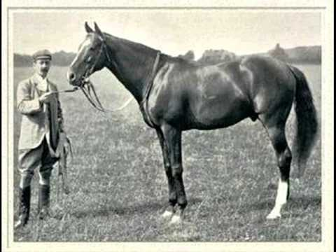 the death of phar lap essay Friday essay: the ugly history of cosmetic surgery  of infection and death  at the ugly history of cosmetic surgery should give us the impetus to .