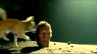 собака суёт в ушко член