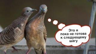 Животные как люди)) А ты себя узнал? 😉| Приколы 2017