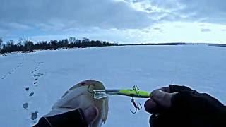 Ловля щуки на балансир  Зимняя рыбалка на Волге  Видео отчет от 16 01 2015 г