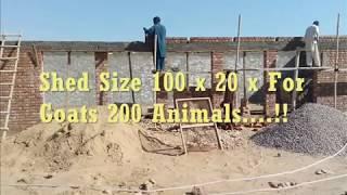Goat Farming in Pakistan Al Madina Goat Farm city in Daharki