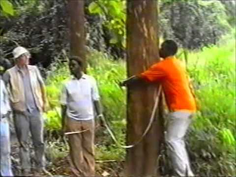 Kilombero Valley Teak Company - First site visit May 1990