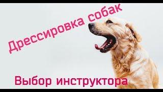 Дрессировка собак. Выбор инструктора.
