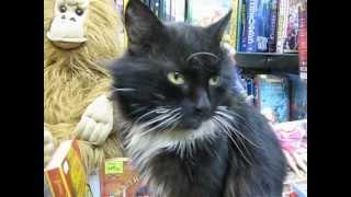 ПРИЖИЛСЯ В КНИЖНОМ черный кот- его назвали Бегемот ч.2