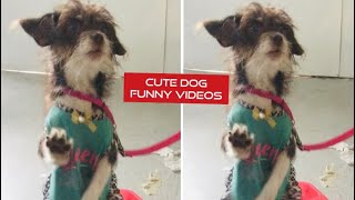 FUNNY DOGS, prepare yourself to CRY WITH LAUGHTER! - Best DOG VIDEOS