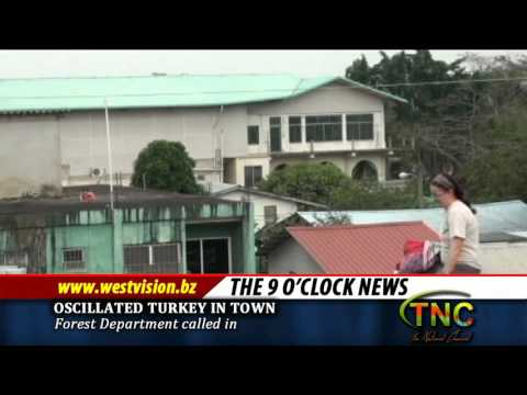 Tour Guide on Oscillated Turkey in town