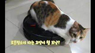 오늘도 어김없이 로봇청소기 타는 고양이 Shorts