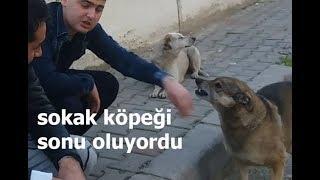 sokak köpeklerini sevdik (arda elni kaptırdı)