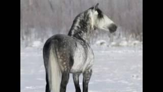 видео К чему снится белая лошадь?