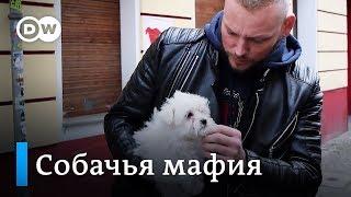 Черный рынок животных в Европе: разоблачение мошенников