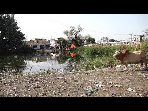 Vanishing ponds need preservation, conservation and rejuvenation