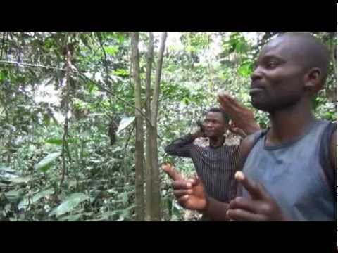 KISSI MBOSSA (EN) -- Pygmies preserving their landscape in DRC