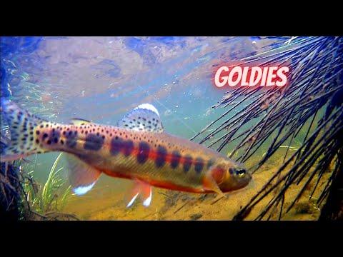 California Golden Trout Fishing