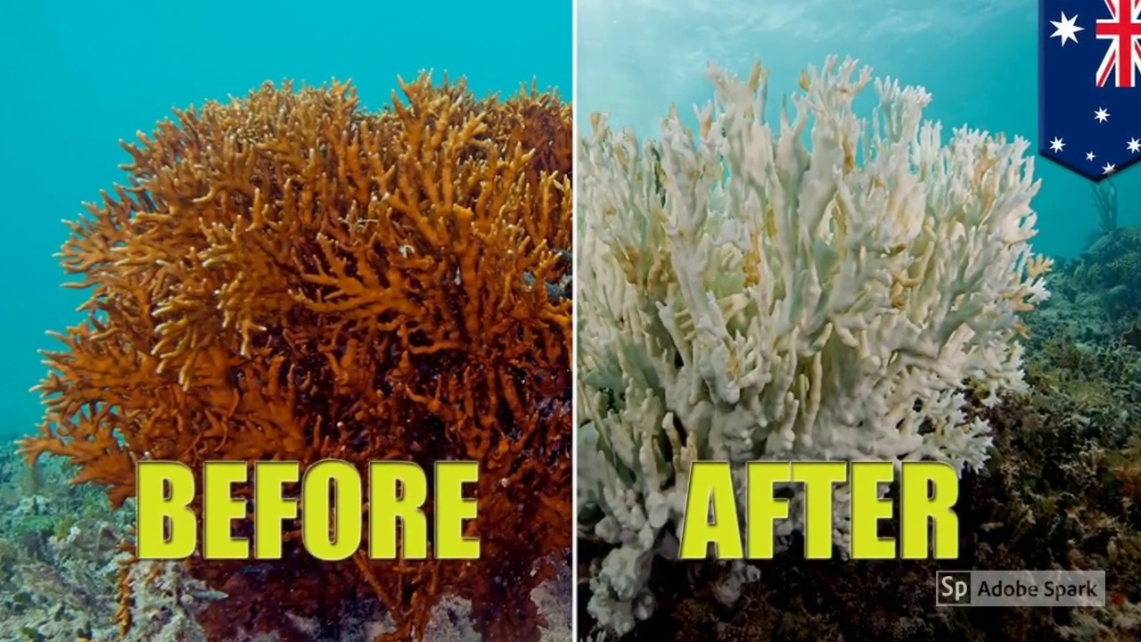 Great Barrier Reef Then And Now You Will Not Believe The Difference