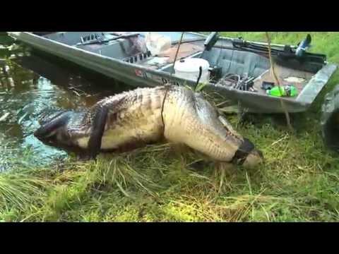 Hunting Louisianna Gators