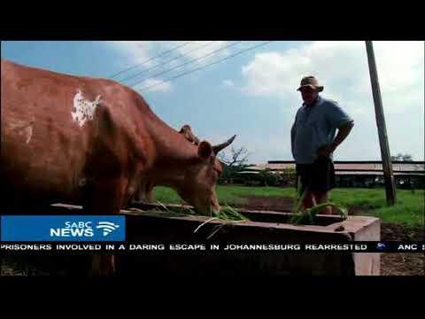 13 hardy farmers from Zimbabwe boost Nigeria