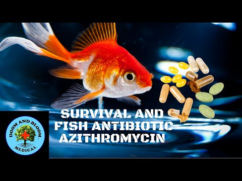 Survival and fish antibiotic azithromycin youtube for Azithromycin for fish