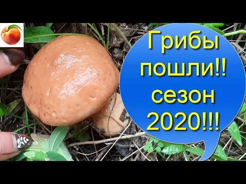 Вопрос: Какой будет урожай лука в Подмосковье в 2020 г. Какие есть приметы?