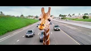 The Hangover - Part III (2013) Giraffe Scene