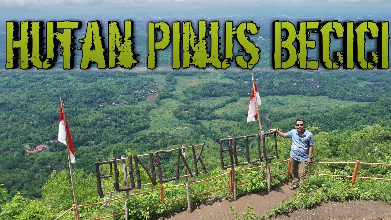 Spot Foto Selfie Di Hutan Pinus Becici Bantul Jogjakarta Review Pinus Becici Jogja Youtube