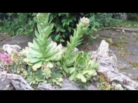 Суккуленты Дачный и садовый декор  Идеи красивых композиций на дачном участке