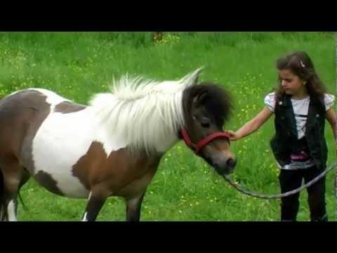 sissi---mein-kleines-pony