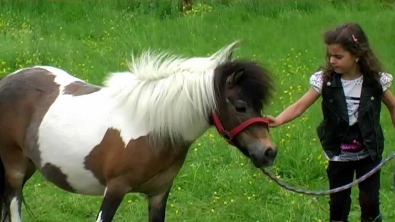 mein eigenes pony