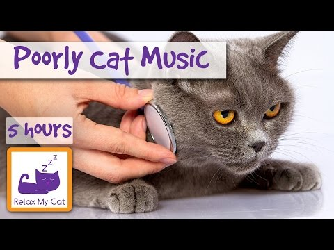 5 Hours of Anti Anxiety Music for Cats, Improve Your Cat's Psychological Health 🐱 #BEHAVE01