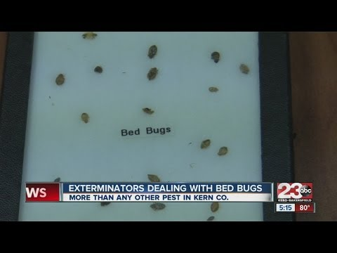 Exterminators dealing with bed bugs