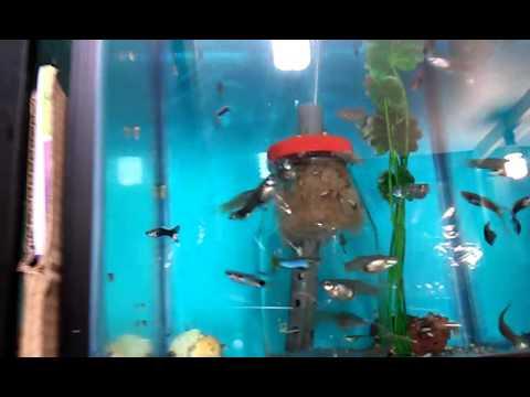 Como hacer un filtro para acuario casero funnydog tv for Como mantener el agua limpia de un estanque