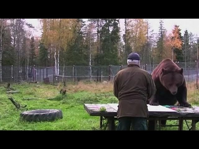 Finland : Exhibition by Juuso, a 17-year-old, 423-kilogram brown bear