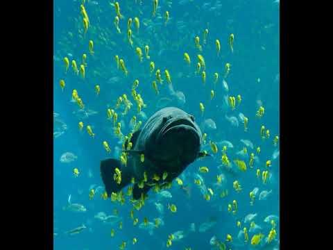 Fish | Wikipedia Audio Article