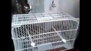 Como hacer  una jaula barata para canarios,jilgeros y otras aves.