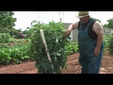 Field Trip through the Vegetable Garden – June 2010