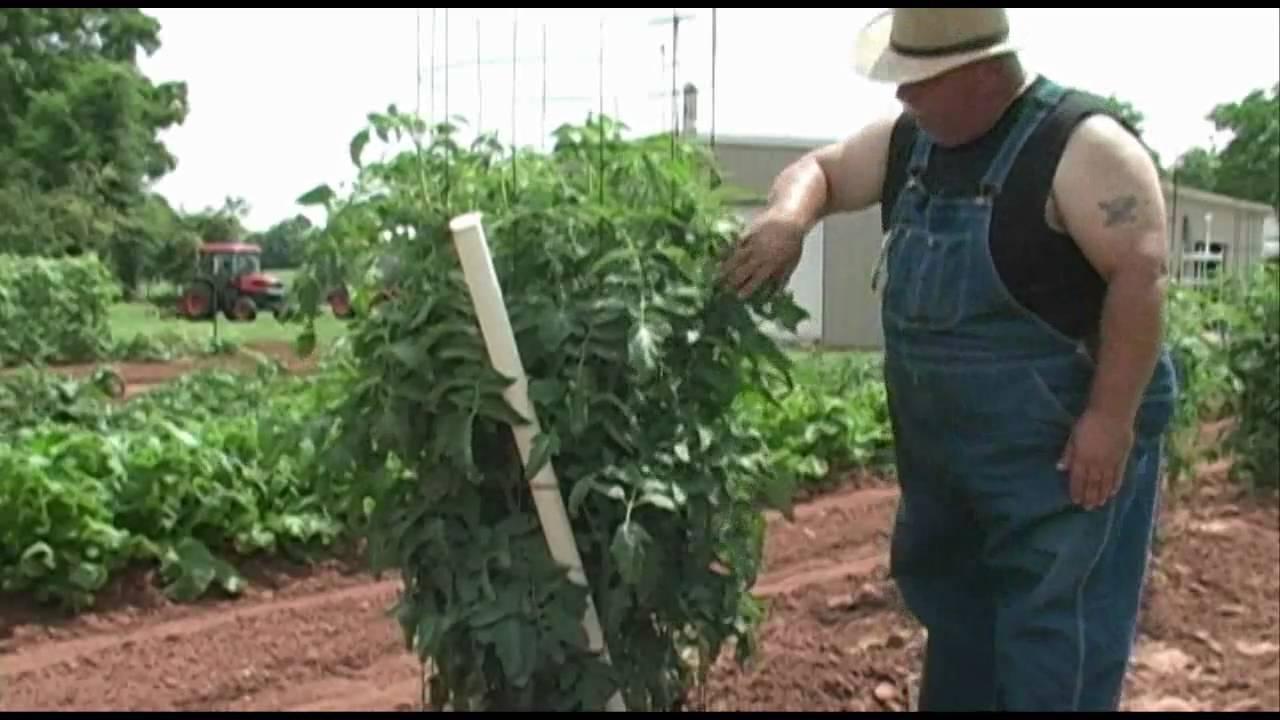 Bayou Gardener Watering System Garden Ftempo